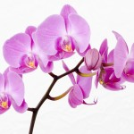 How to Make Orchids Re-Bloom