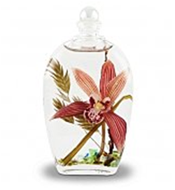 Orchid in a glass