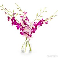 Origin of orchids