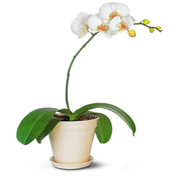 Orchid Gift Ideas