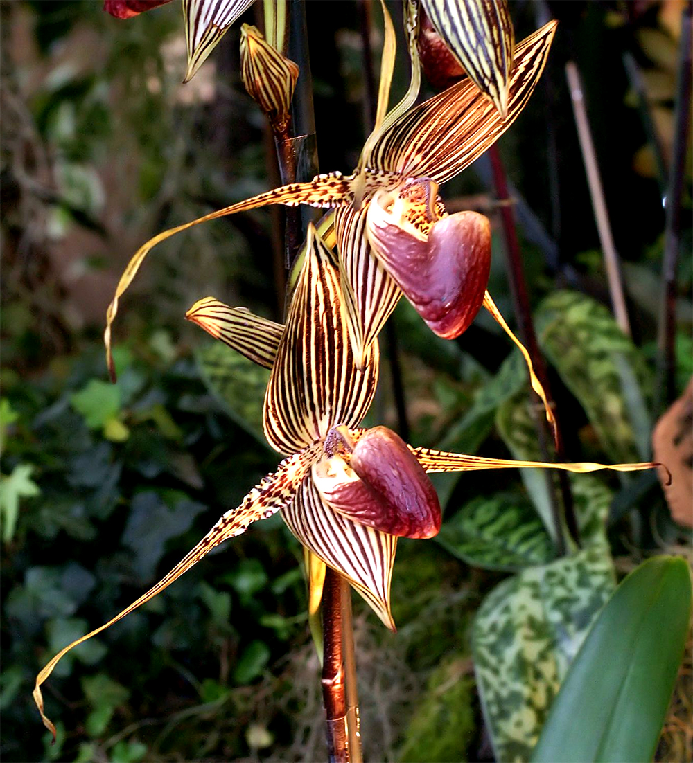 The World's Most Expensive Orchid