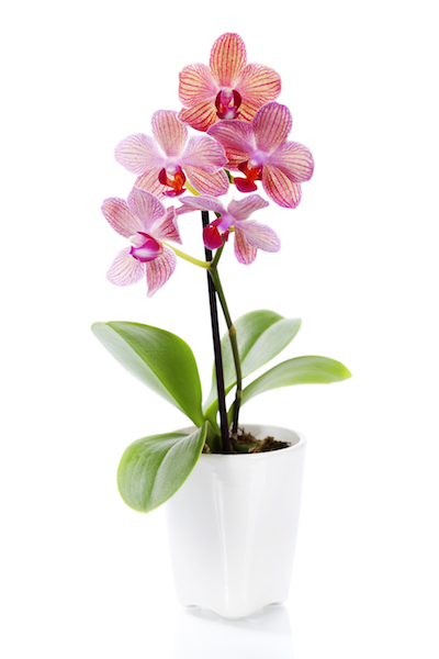 List of Orchid Abbreviations