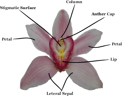 What Is An Orchid?