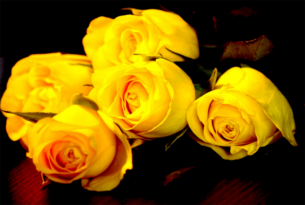 What Do Yellow Roses Mean?